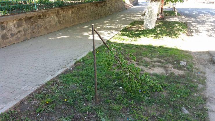 Copaci vandalizați în acest weekend în zona centrală a Tășnadului