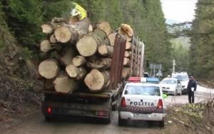 Sancţionat pentru transport ilegal de material lemnos