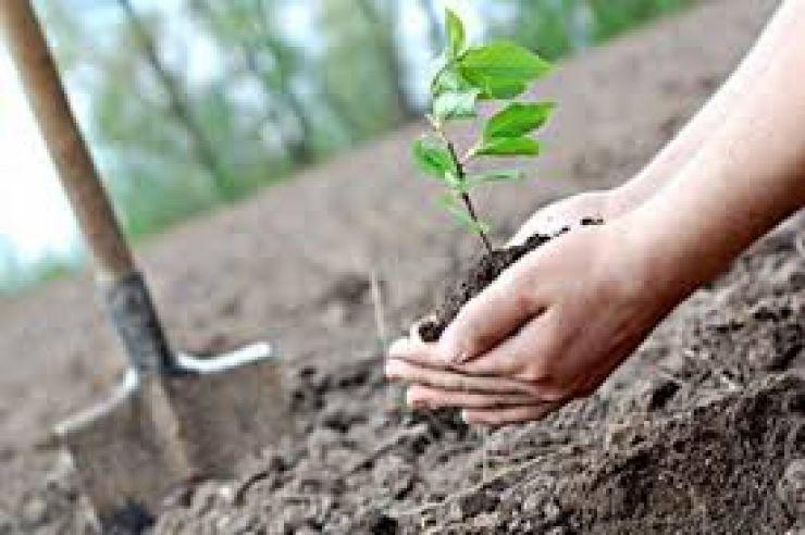 """APIA dă drumul la programul """"Sprijin pentru prima împădurire și crearea de suprafețe împădurite"""""""