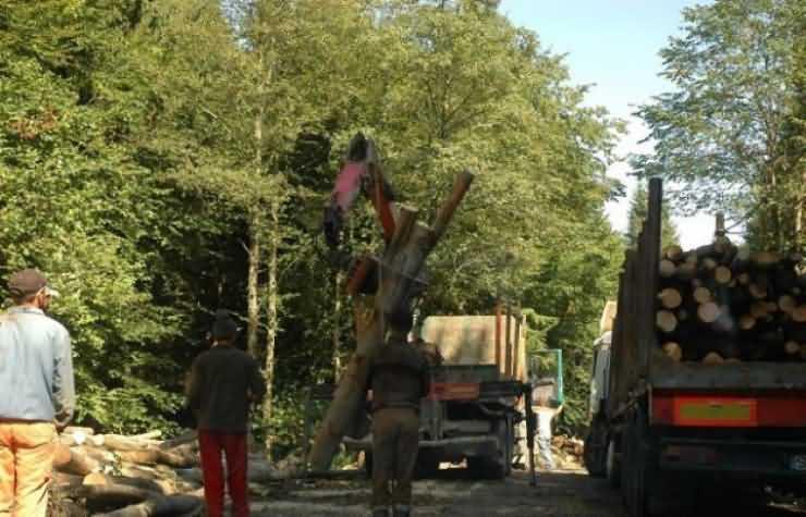 Un bărbat și-a pierdut viața în pădurea Cerhat