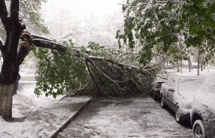 Zăpada a doborât mai mulți copaci în zona Cavnic