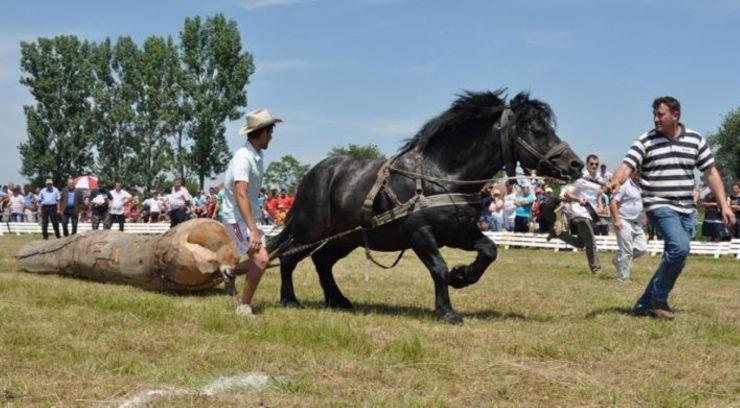 Expoziție de cai, la Rușeni
