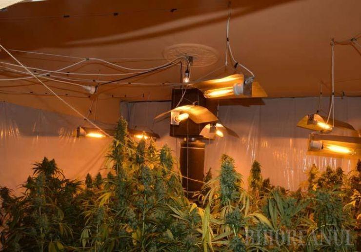 Tânăr prins cu 33 kg de cannabis