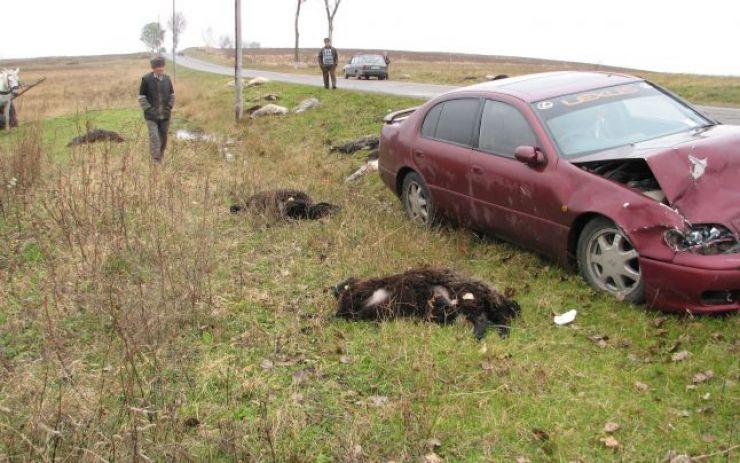 Masacru la Negrești Oaș: 47 de oi au fost spulberate de un şofer
