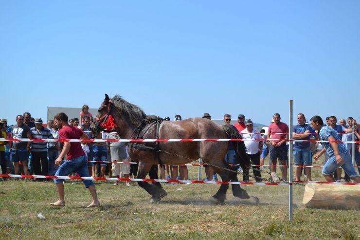 Câștigătorii concursului de tracțiune și frumusețe cabalină de la Valea Măriei