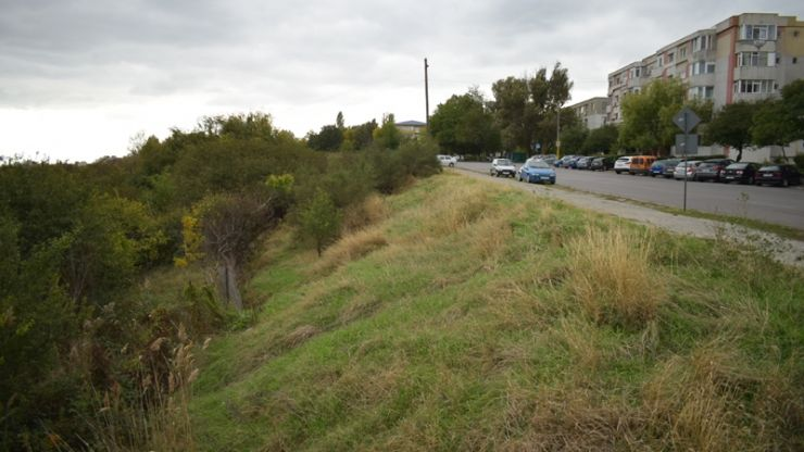 O pășune din municipiu, închiriată prin atribuire directă de la Primăria Satu Mare