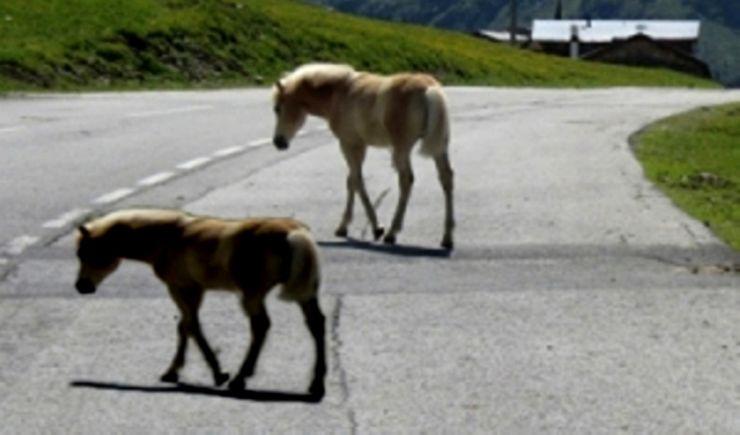 Doi cai spulberați de o mașină