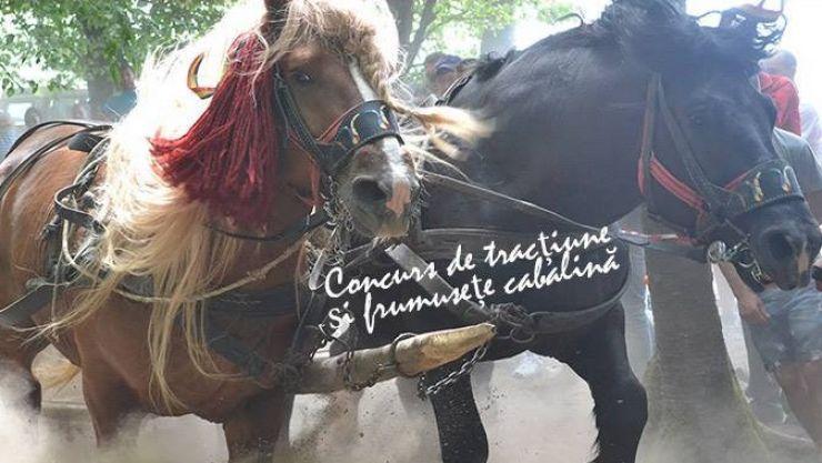 Concurs de tracțiune și frumusețe cabalină la Valea Măriei