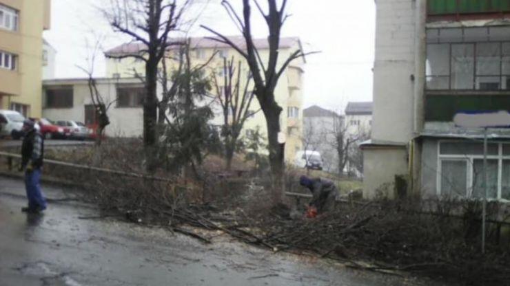 A început acțiunea de toaletare a copacilor din municipiu