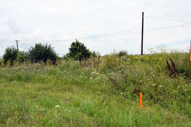 Somații pentru proprietarii care nu își curăță terenurilor infestate cu Ambrozia