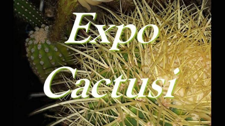 Expoziție de cactuși și plante suculente la Muzeul Județean