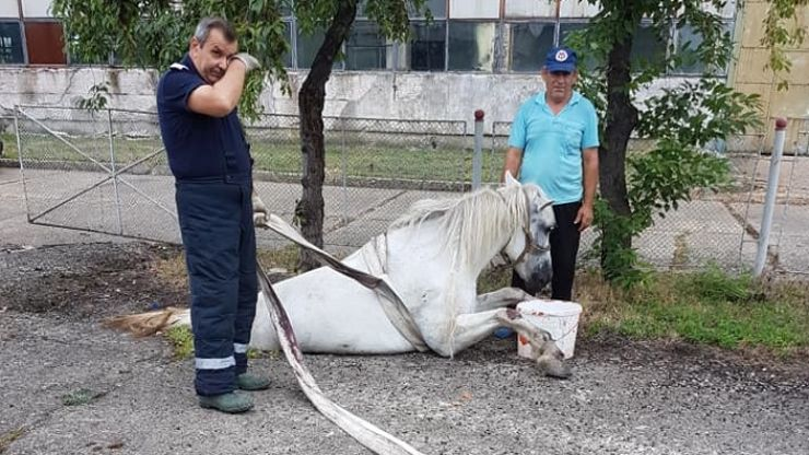 Cal salvat dintr-un canal