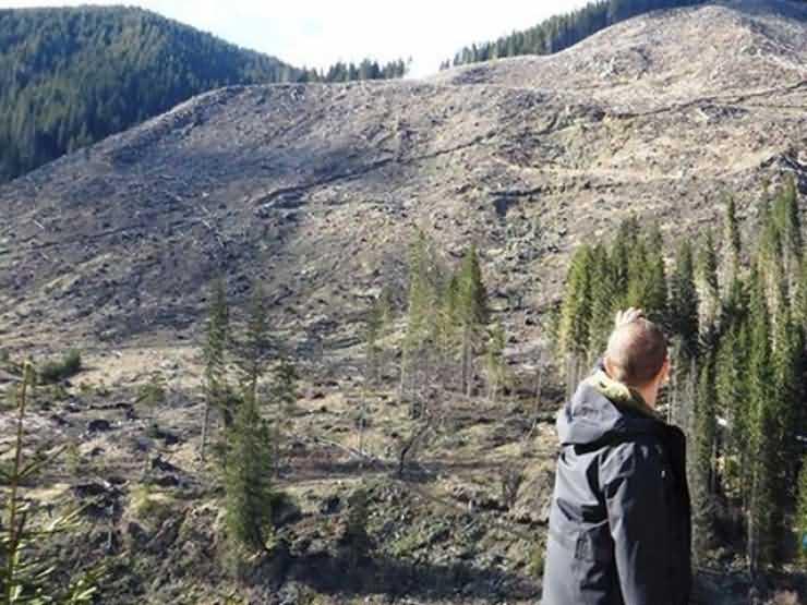 Tăieri ilegale de păduri în Rezervaţia Naturală Râul Tur. Prefectul Eugeniu Avram a dispus de URGENȚĂ o anchetă (VIDEO)