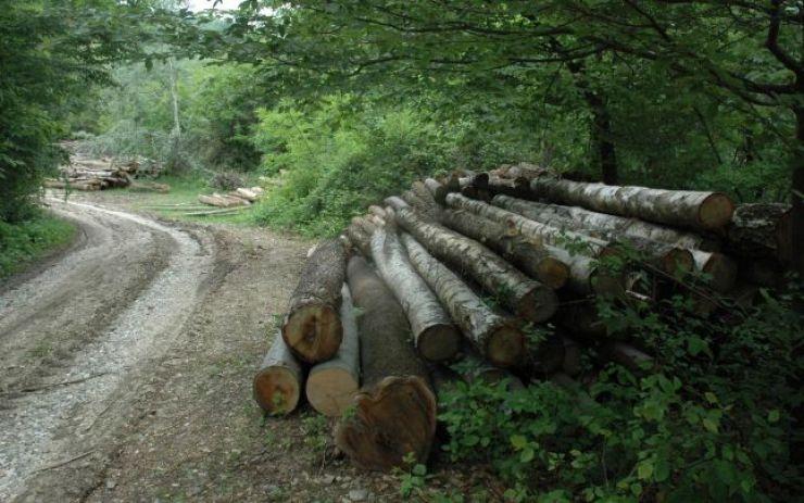 Zeci de arbori tăiați de un localnic din Boinești
