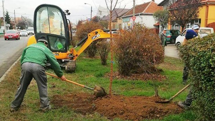 FOTO   Peste 1000 de arbori plantați în Satu Mare în această toamnă