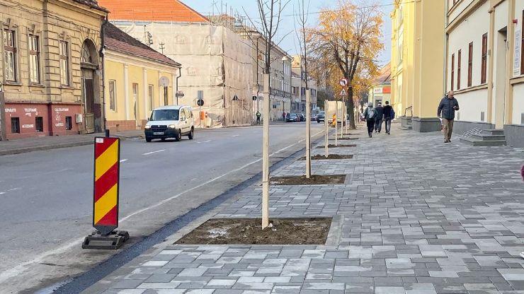 Primăria a plantat peste 600 de arbori, în municipiu