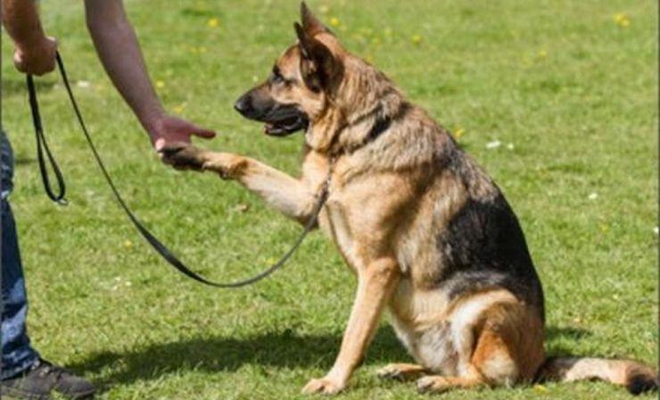 Primăria Carei organizează un curs de dresaj canin