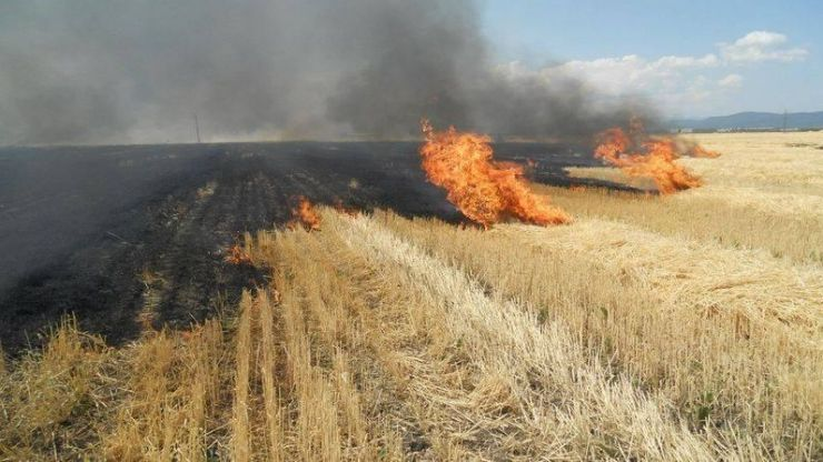 Incendiu de vegetație pe strada Odobescu din municipiul Satu Mare