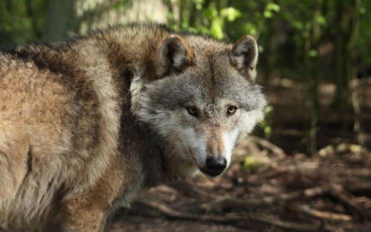 Recensământul animalelor rare şi protejate în judeţul Satu Mare