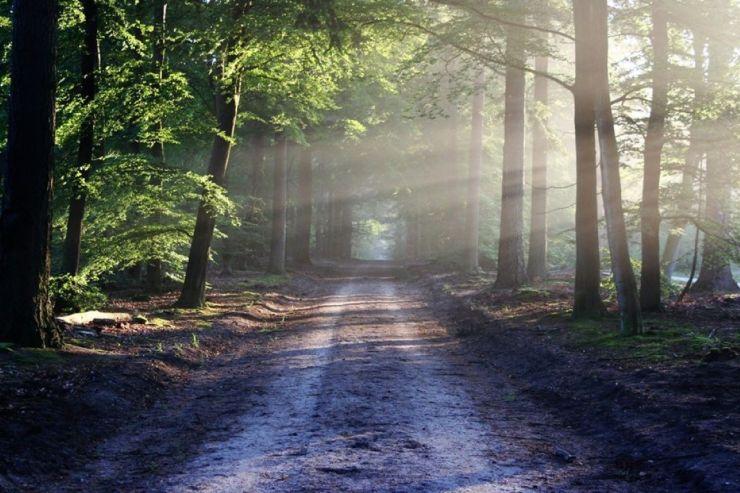 UDMR propune simplificarea procedurii de modernizare a drumurilor forestiere