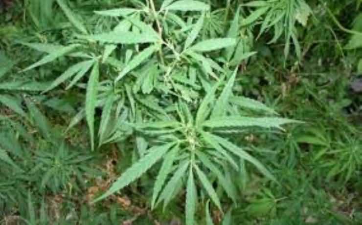 Traficanți de droguri prinși în flagrant