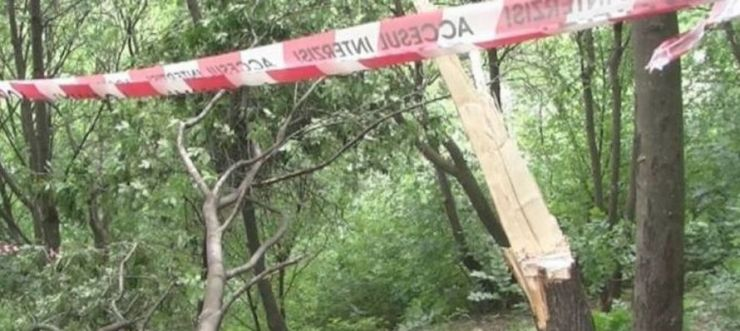 A murit strivit de arborele pe care l-a tăiat