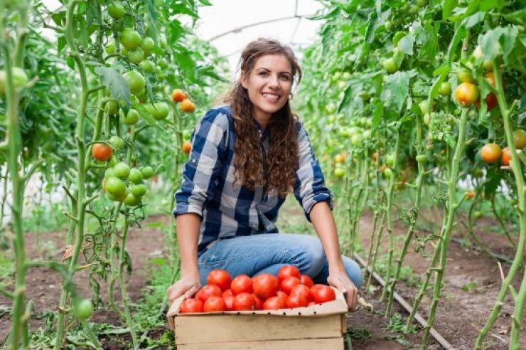 Peste 150 de tineri fermieri sătmăreni au obținut fonduri nerambursabile